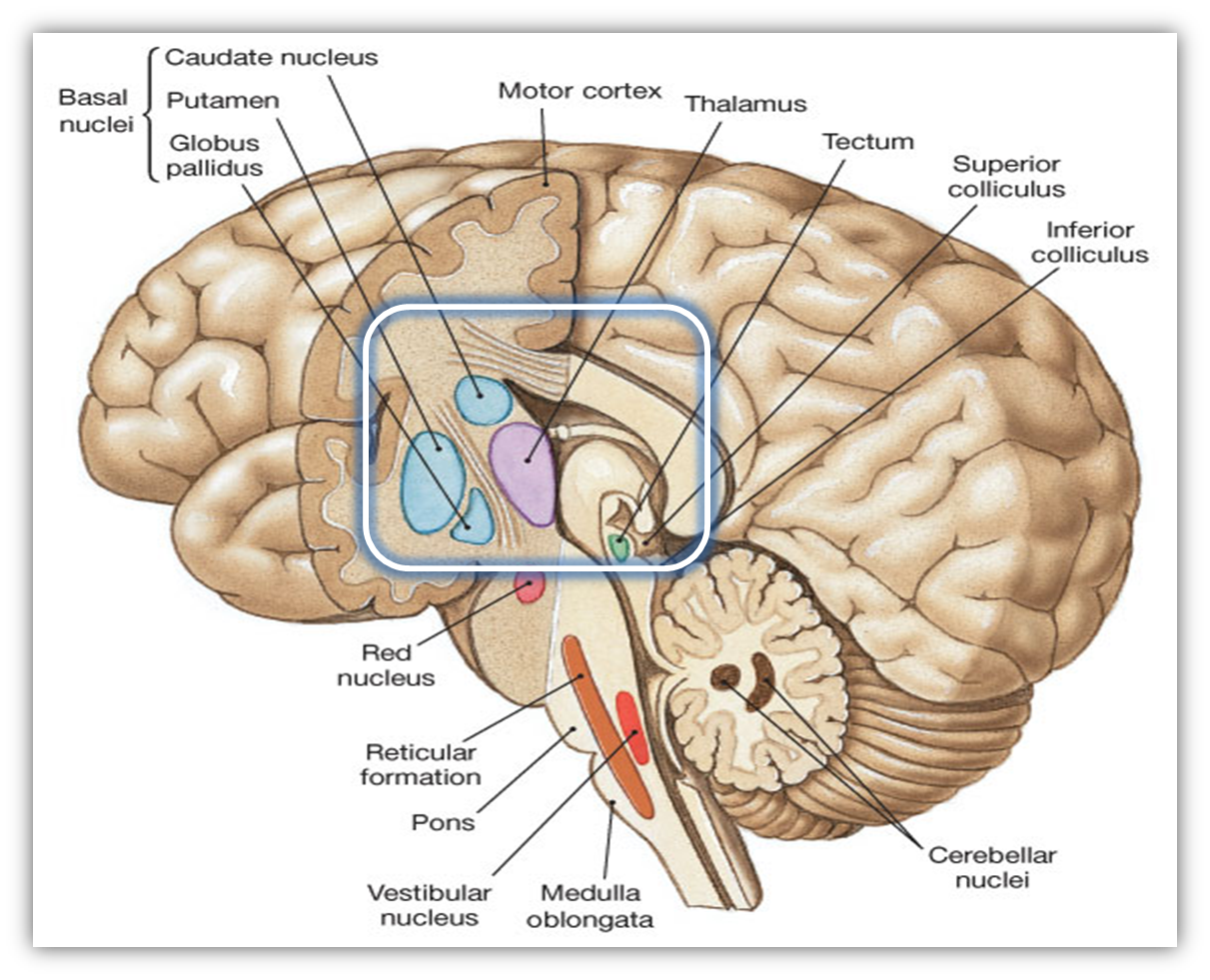 an in depth analysis of the functionality of the human brain The human brain is a complex  that appears to be involved in word analysis  l al otaiba, s dyslexia and the brain: what does current research tell us the.